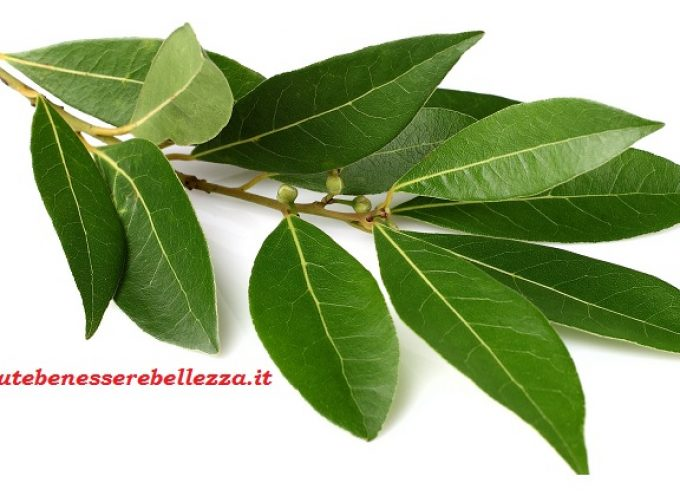 Alloro officinalis: usi terapeutici