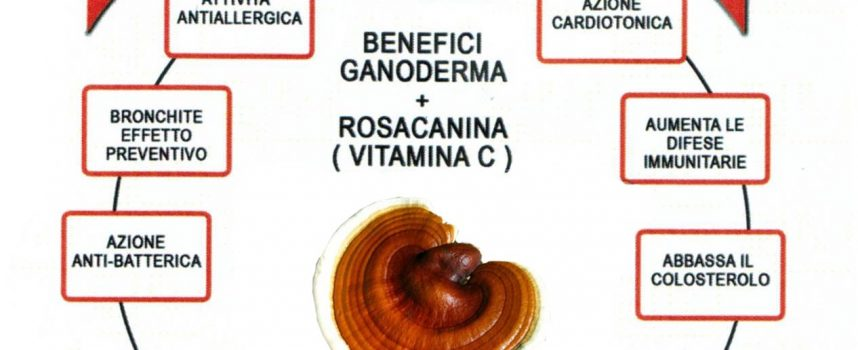 Ganoderma e flora intestinale
